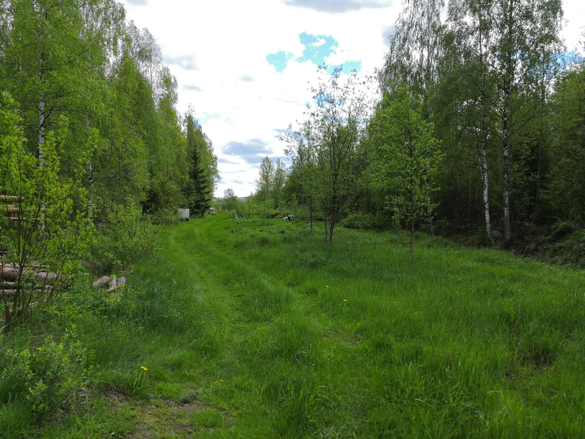 Näkymä vehreälle palstaviljelyalueelle.