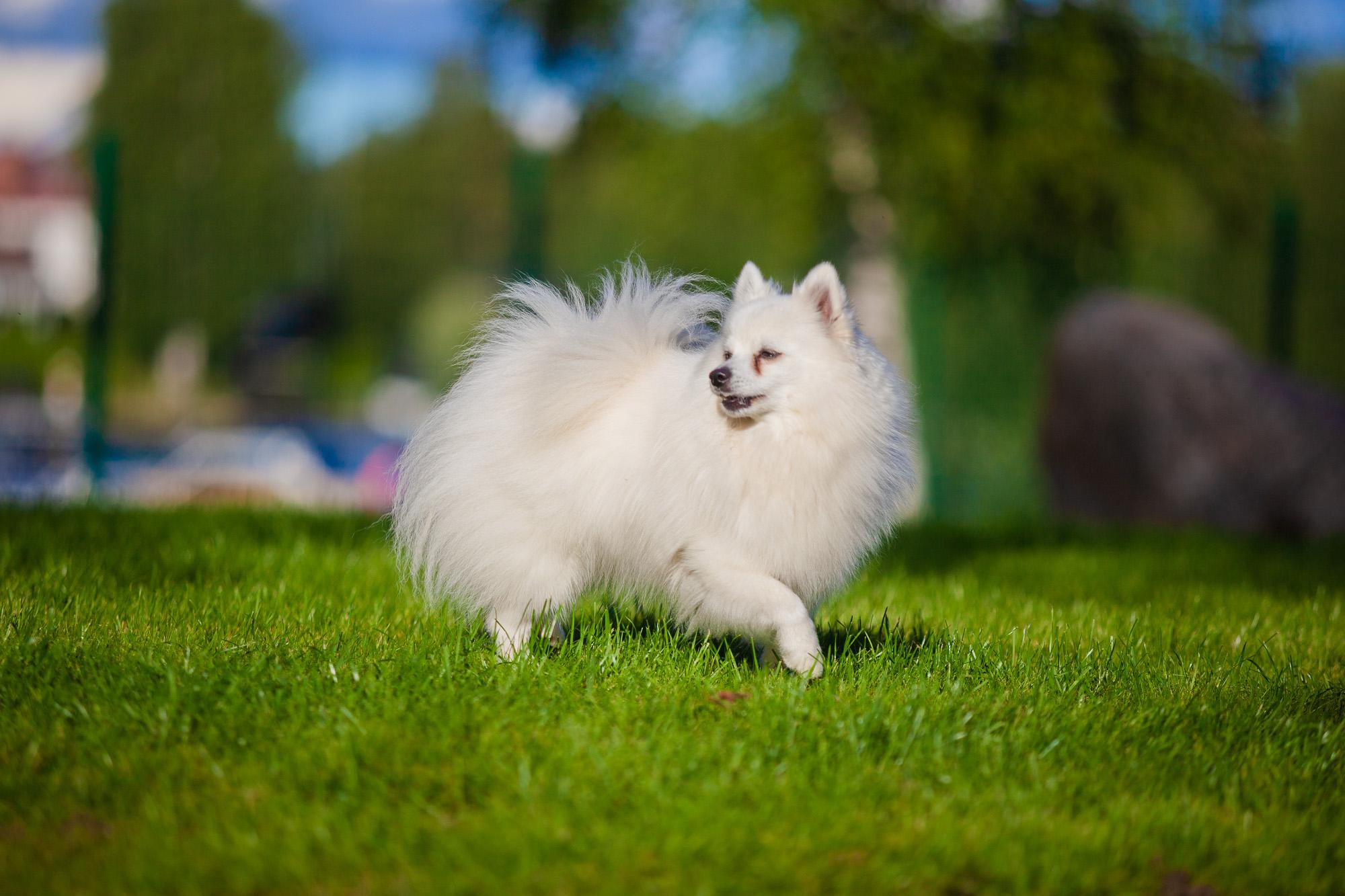 Koira koirapuistossa